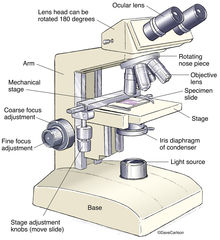 illustration, binocular, compund, microscope
