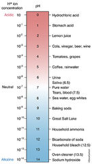 ph scale, acidic, battery acid, alkaline, liquid bleach