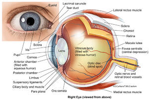 external, internal​, structure, human eyeball, eye
