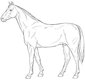 horse, line art, lateral view, standing