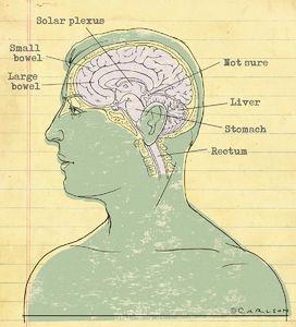 midsagittal brain, brain anatomy