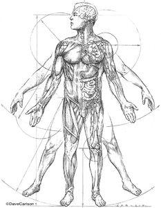 illustration, Leonardo da Vinci, vitruvian man, anatomic, proportions of man