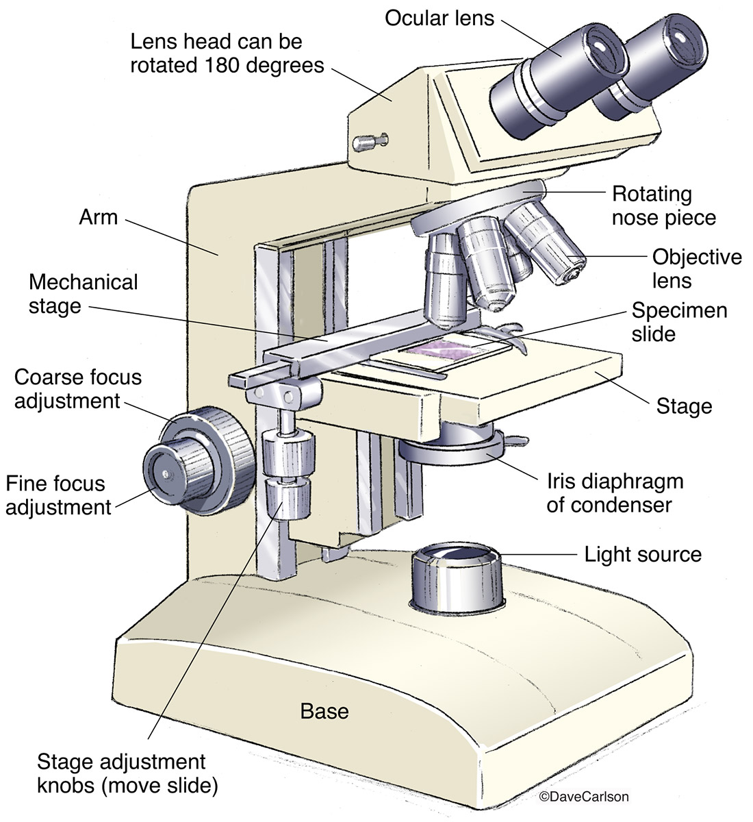 illustration, binocular, compund, microscope, photo