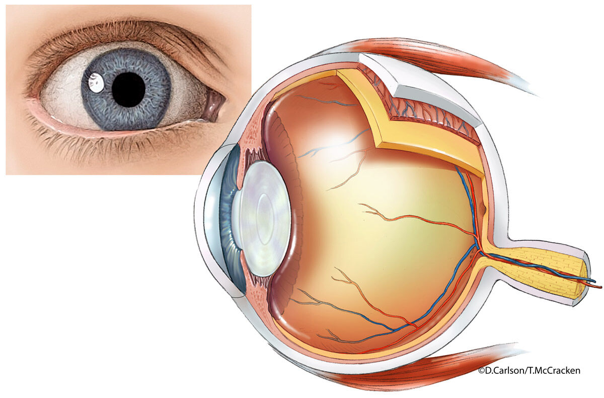 Eye Anatomy Diagram Illustration