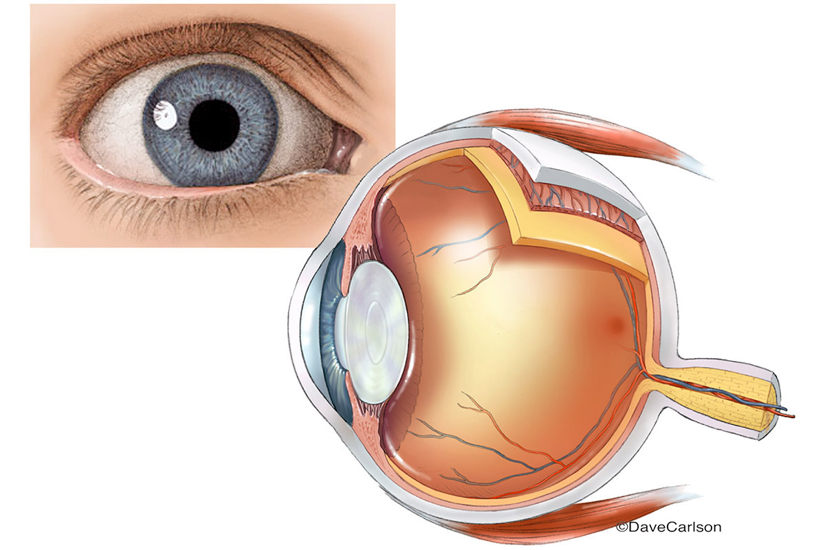 Eye Anatomy Diagram Illustration