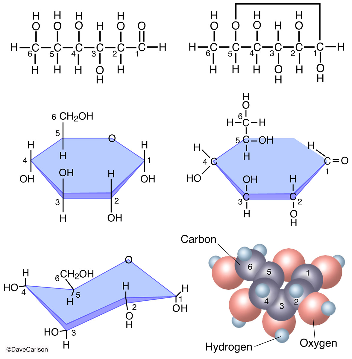 Diagram, molecular structure, glucose molecule, C6-H12-O6​​, photo