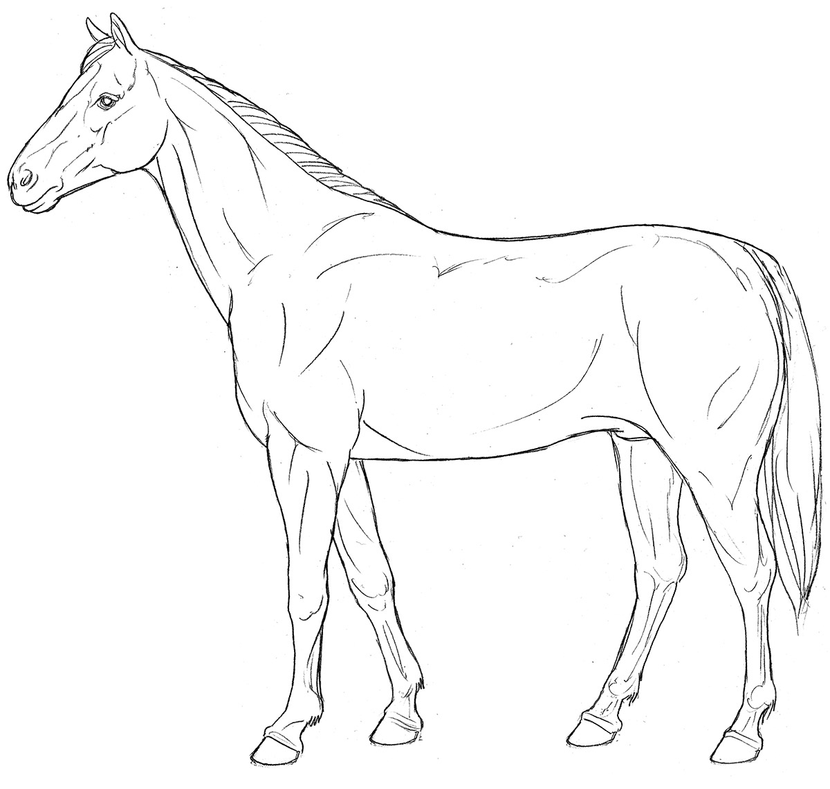 horse, line art, lateral view, standing, photo