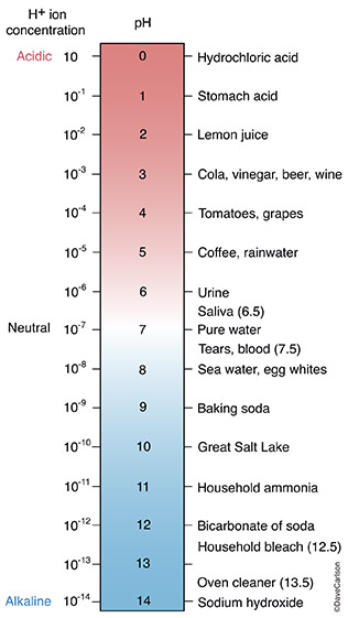 ph scale, acidic, battery acid, alkaline, liquid bleach, photo