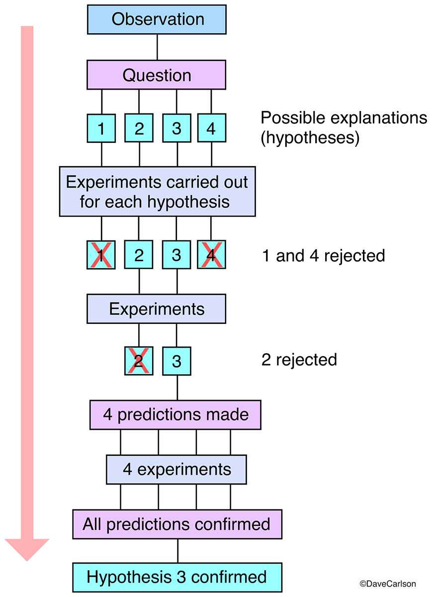 The scientific method is a process used to study natural phenomena and can also be used to test whether a statement is accurate...