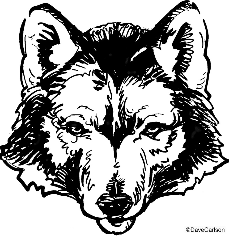 B&W ink illustration, drawing, timber wolf, face, photo
